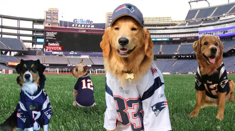 Patriots Underdog